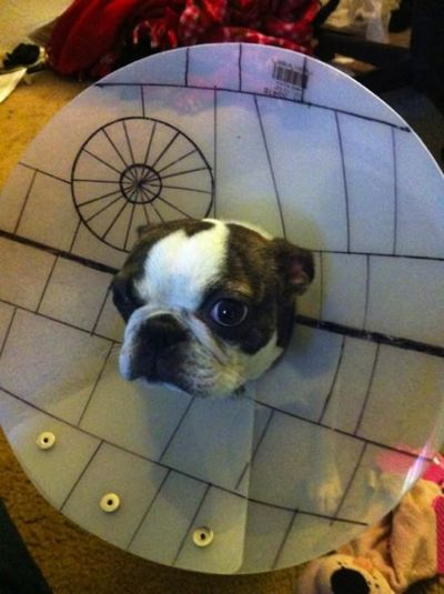 Death Star Cone of Shame