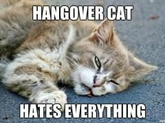 hangover cat hates everything
