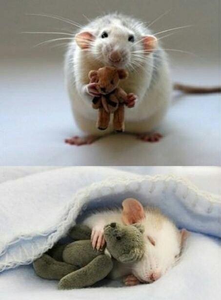 mouse with teddy bear