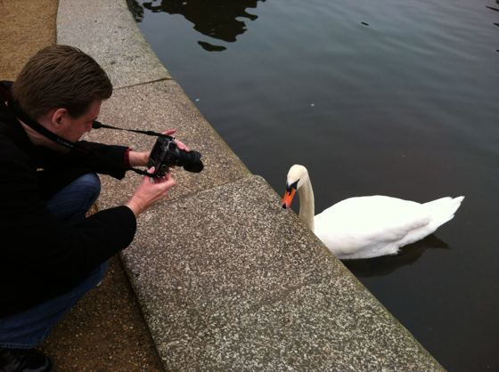 smile swan