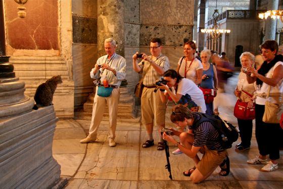 Hagia Sophia cat