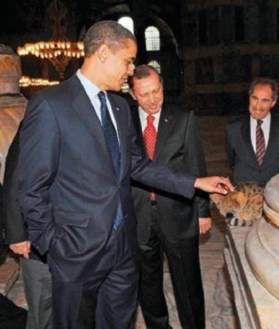 Hagia Sophia cat Barack Obama