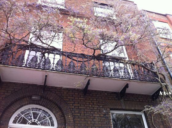 balcony tree