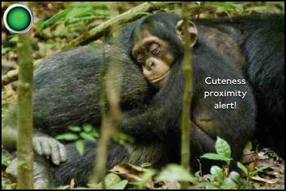 Chimpanzee green light