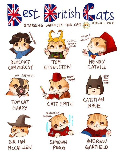 bestbritishcats