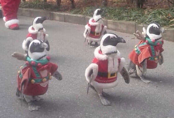 penguinsantas