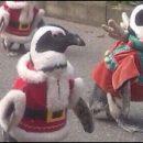 geeky Christmas: penguin Santas