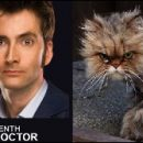 Doctor Who thing: what if the Doctors were cats (part 2)?