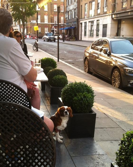 sidewalkcafedog