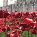 London photos: sea of poppies