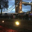 London photo: poppies in the shadow of Tower Bridge