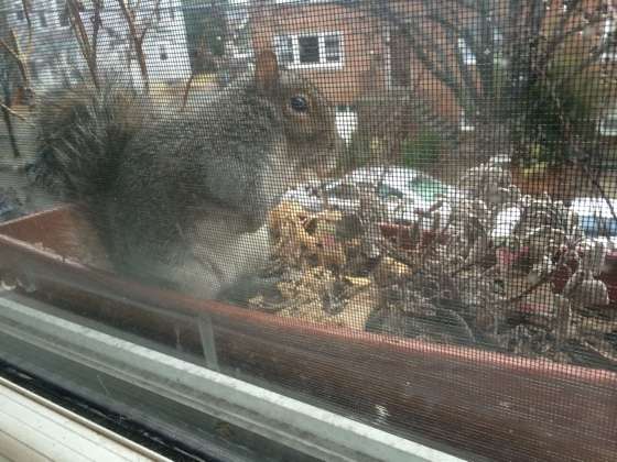 fathappysquirrel
