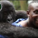 Virunga documentary review: no walk in the park