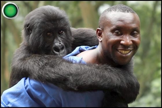 Virunga green light
