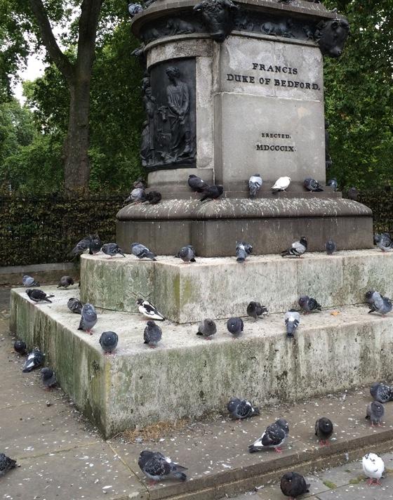 pigeonhangout