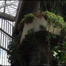 London photo: discovering the Barbican conservatory