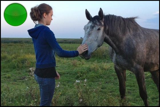 Of Girls and Horses green light