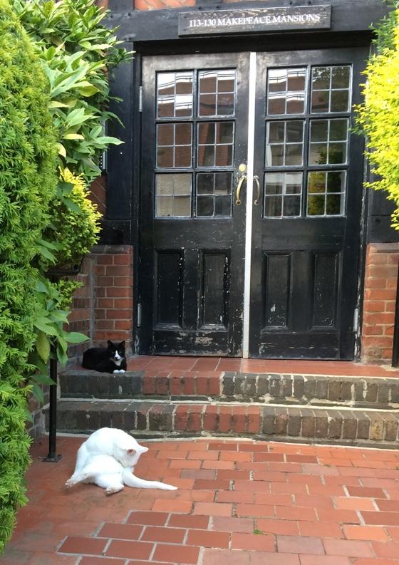 doorstepcats
