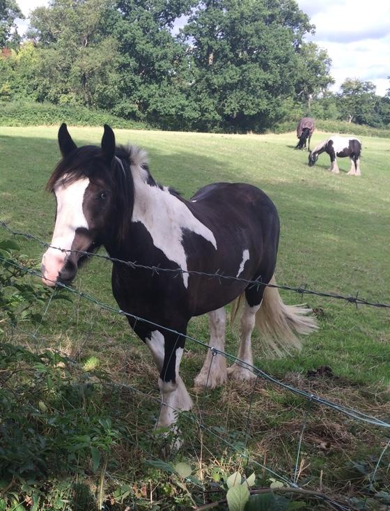 horseencounter