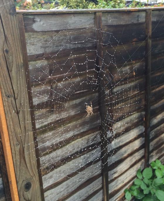 spectacularweb