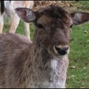 London photos: Richmond Park deer