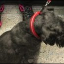 London photo: tube doggie
