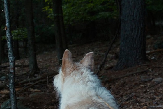 """I'm telling you, hoomans, there's something out there in the woods!""--Stanley the dog"