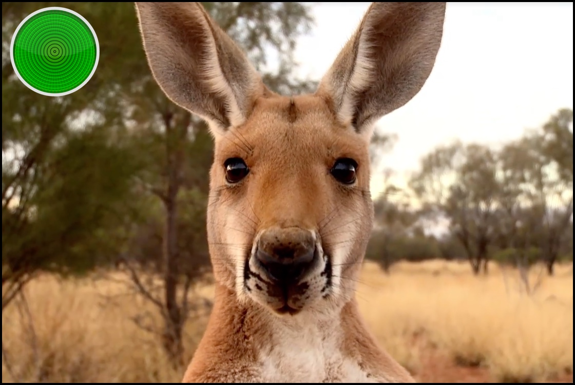 Kangaroo A Love-Hate Story green light