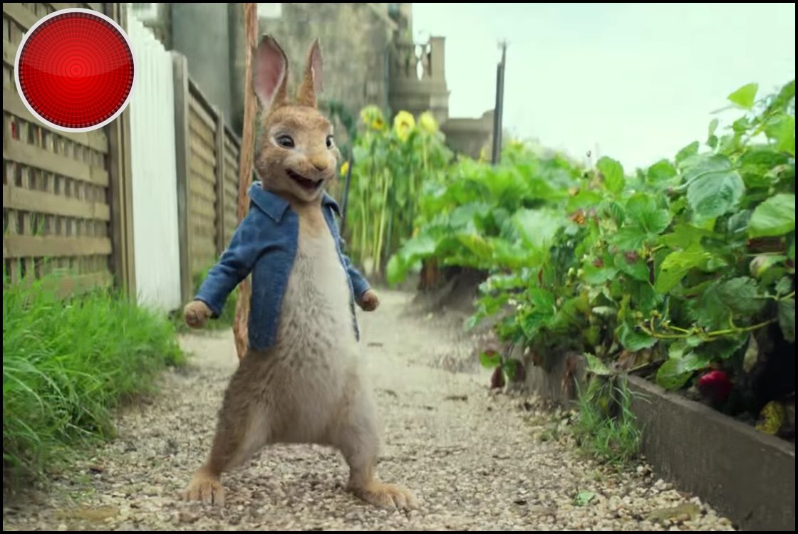Peter Rabbit red light