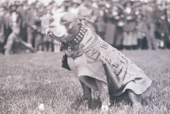 BEST GOOD BOY 14/10 WOULD GO TO WAR WITH OMG LOOK AT HIS LITTLE UNIFORM!