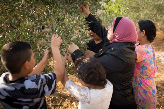 Kholoud Al-Faqih picking olives with her kids. It seems that having a career does not, in fact, cause a lady's ovaries to shrivel up.