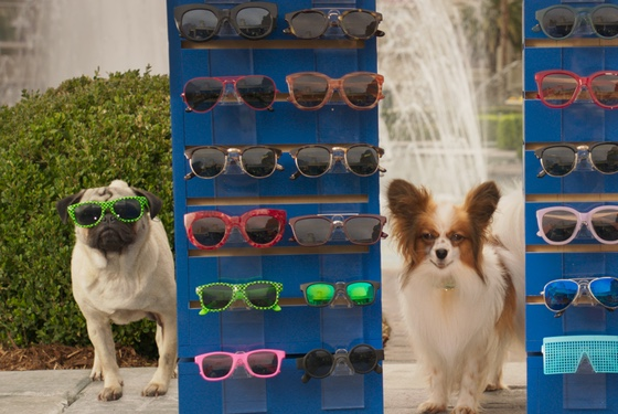 It's funny cuz there's a dog wearing sunglasses. And dogs don't wear sunglasses. It's like the dog has magically become like a human.