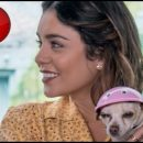 Dog Days movie review: a mangy mongrel of a movie