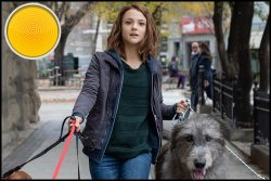 A Dog's Journey movie review: Does the Dog Die? The Movie