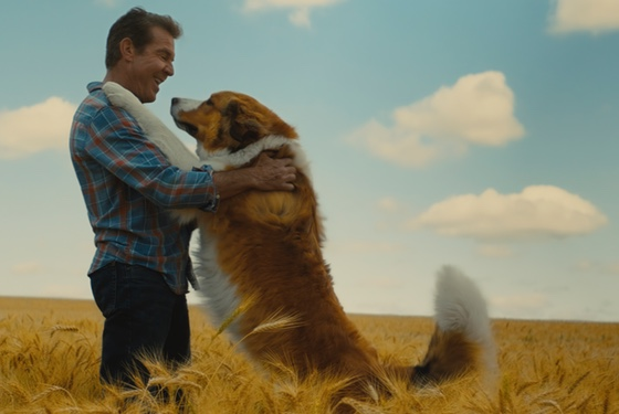 A Dog's Journey Dennis Quaid