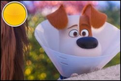The Secret Life of Pets 2 movie review: gone to the dogs