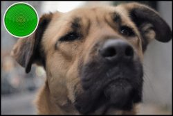 Stray documentary review: a dog's eye view of humanity, from the outside